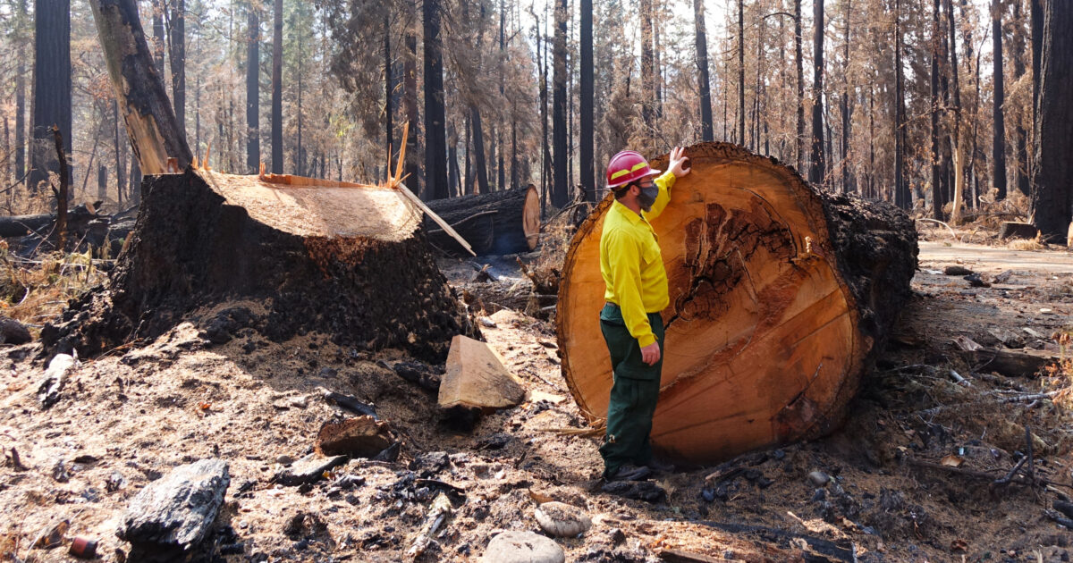 Despite What the Logging Industry Says, Cutting Down Trees Isn't Stopping Catastrophic Wildfires