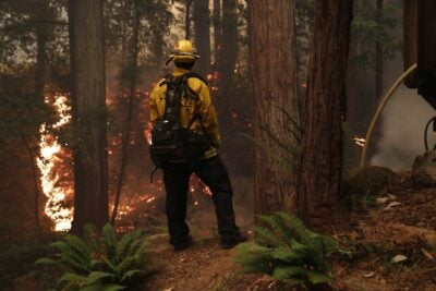 A Cal Fire firefighter standing with his back to the camera facing a forest fire.